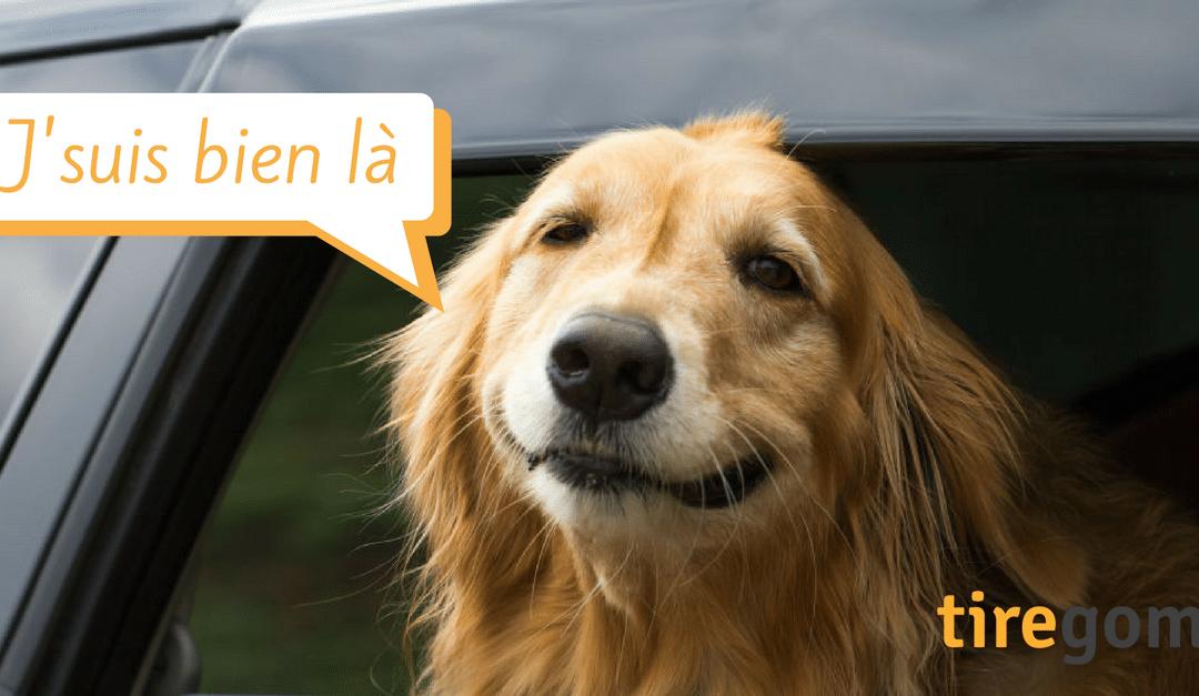 Top 17 des chiens fans d'automobile