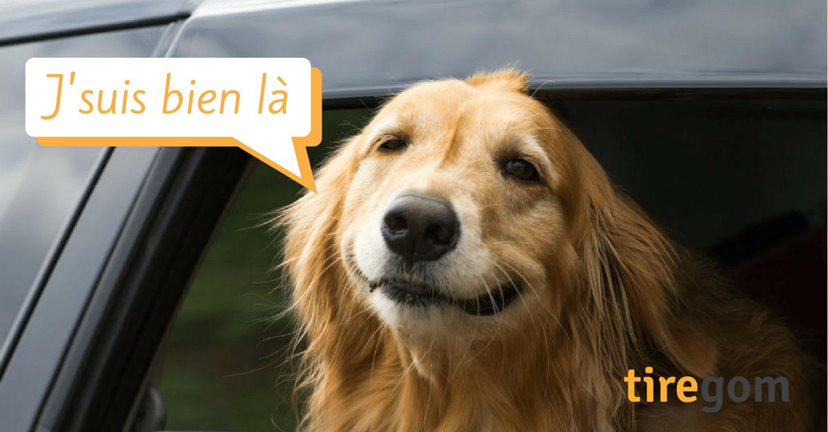 chien aime auto